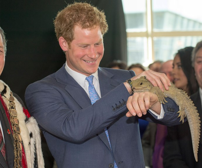 Prince Harry meets his namesake - a 100-year-old tuatara - in Invercargill earlier this year.