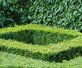 How to grow and maintain shrubs in your garden