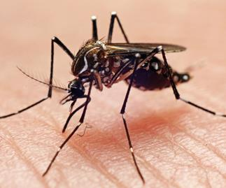 Possible case of sexually transmitted Zika virus being investigated in NZ