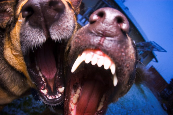 Auckland school on lock down after students chased by dogs