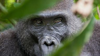 Outrage at killing of gorilla after child gets into enclosure