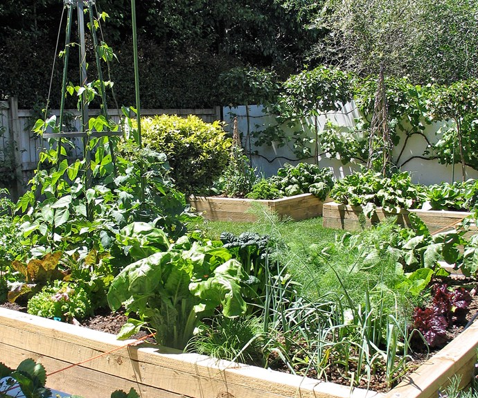 Raised vegetable beds that work with the overall garden design are a real plus for home buyers