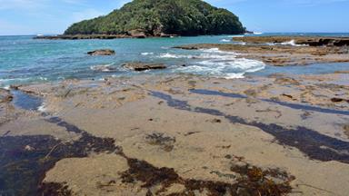 7 Reasons to visit Goat Island marine reserve