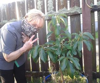 Grandma with avocado tree