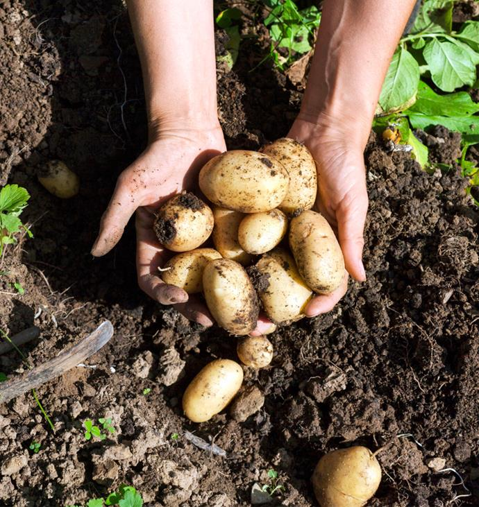 What Vegetables To Plant Now: What Vegetables To Plant Now For Summer