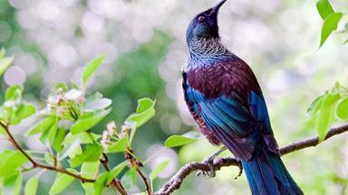 How to: Make a DIY bird feeder