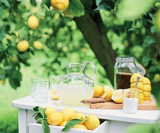Your guide to growing citrus plants
