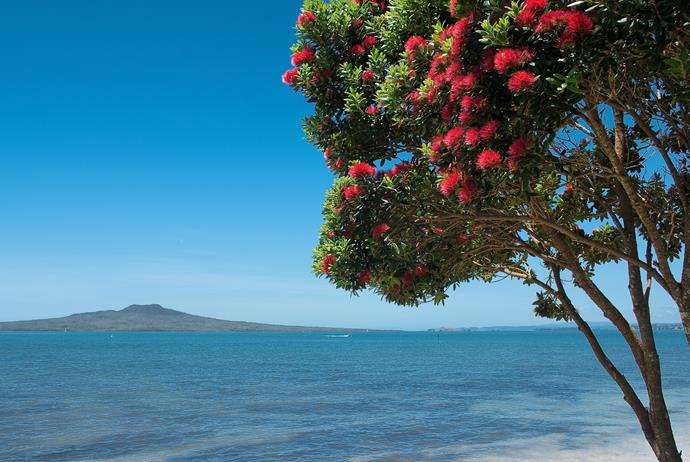 Sitting under a Pohutukawa tree at the beach while the kids play.