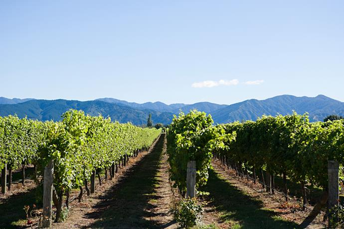 Two words: Vineyard festivals.
