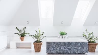 What are the best plants for the bathroom?