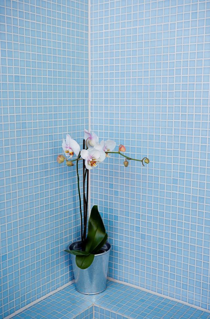 Plant life instantly rejuvenates a space