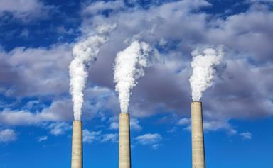 B vitamins may protect against environmental pollutants