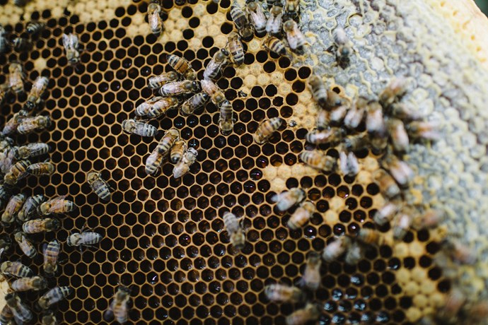 Hives are valued at $2,000 each