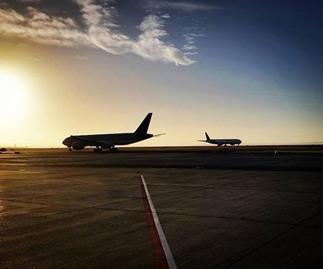 Aviation security dog shot at Auckland International Airport