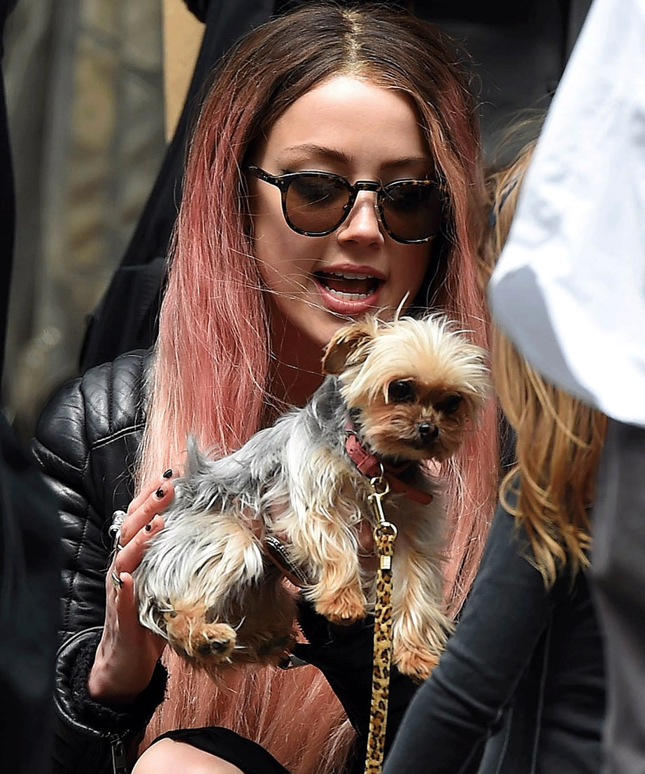 """Depp and Heard were given """"50 hours"""" to take the dogs back to California or the dogs would have been euthanised."""