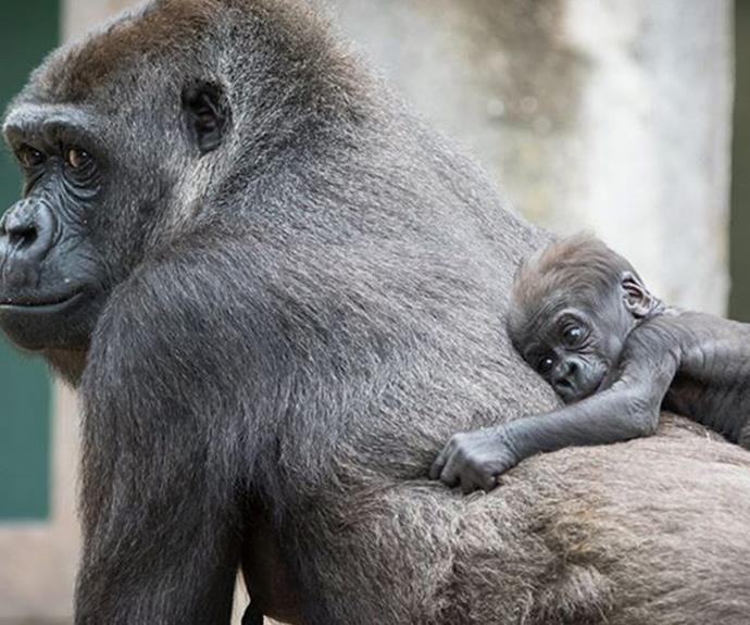 But nothing beats a cuddle with mamma!