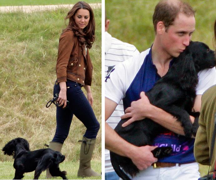 Lupo was born in December 2011 from a dog named Ella, which was owned by the Duchess's parents, Michael and Carole Middleton.