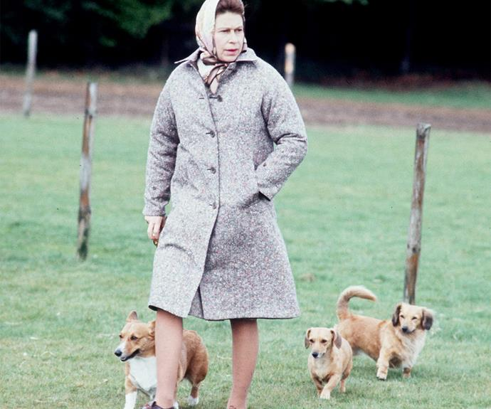 The Queen adores animals especially her beloved dogs, the corgis.