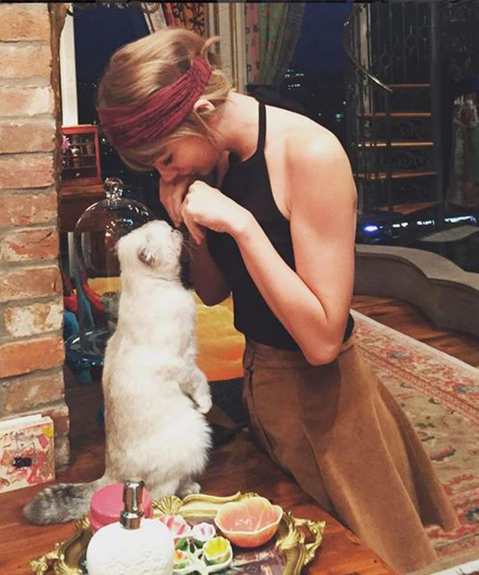 Taylor's two adorable cats, Dr. Meredith Grey and Detective Olivia Benson, are regular guests on her Instagram feed.