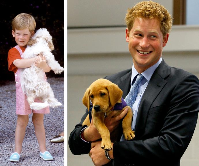 "It's clear that his love for his furry friends stems from his [childhood](https://www.nowtolove.com.au/royals/british-royal-family/royal-pets-the-posh-pooches-that-keep-this-regal-family-company-19768|target=""_blank"")."