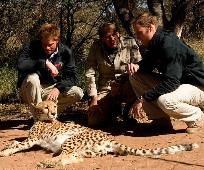 "After his shining service with the army, Prince Harry became a wildlife crusader, working hard in Africa for three months describing it as his ""dream job""."