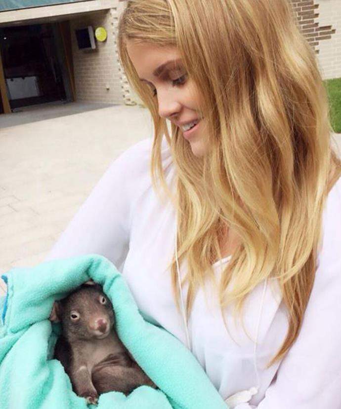 Lady Kitty at Victoria's Zoo Healesville Sanctuary.