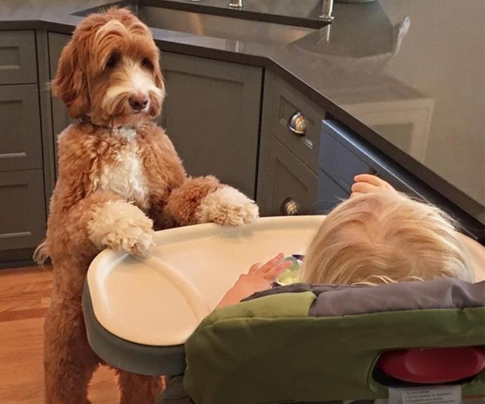 """He also makes for a great babysitter. Reagan's always eager to hang out with his buddy. """"When I put the baby down for a nap, Reagan stays right outside his door and waits for him to wake up and play,"""" said his owner."""