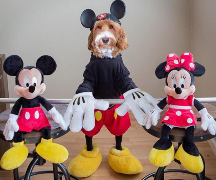 """Did we mention he likes to goof around? """"Will the real Mickey please stand up?"""" Reagan captioned this pic."""