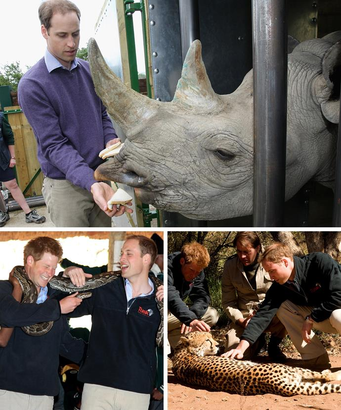 Both Harry and William are exceptionally passionate about the world's animals and have focused their efforts in protecting them.