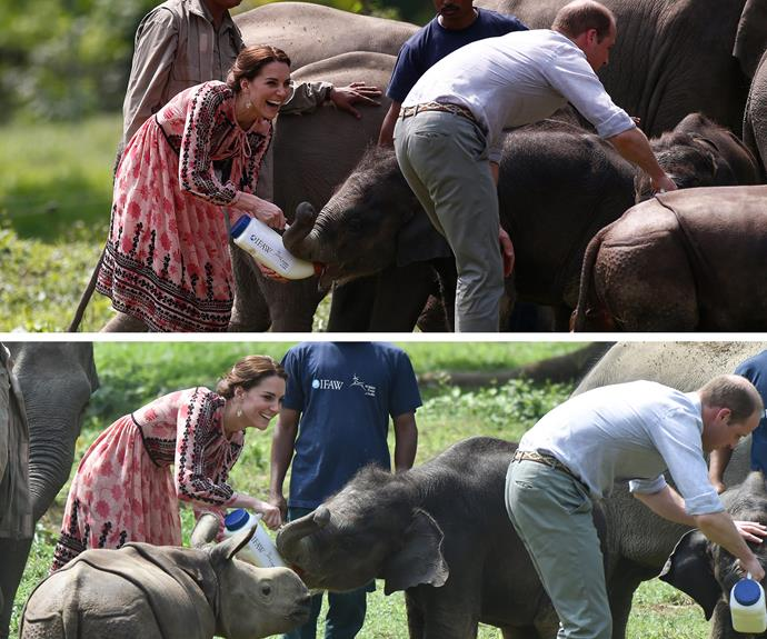 The couple paid a visit to the Centre for Wildlife Rehabilitation and Conservation, where they were delighted by the sweet animals including the little elephants.