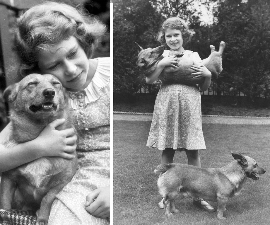 While Elizabeth is known for love of corgis...