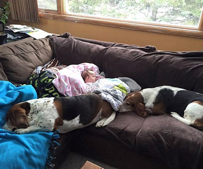 The Basset Hounds, pictured with Nora at home before her stroke, simply adore the five-month-old.