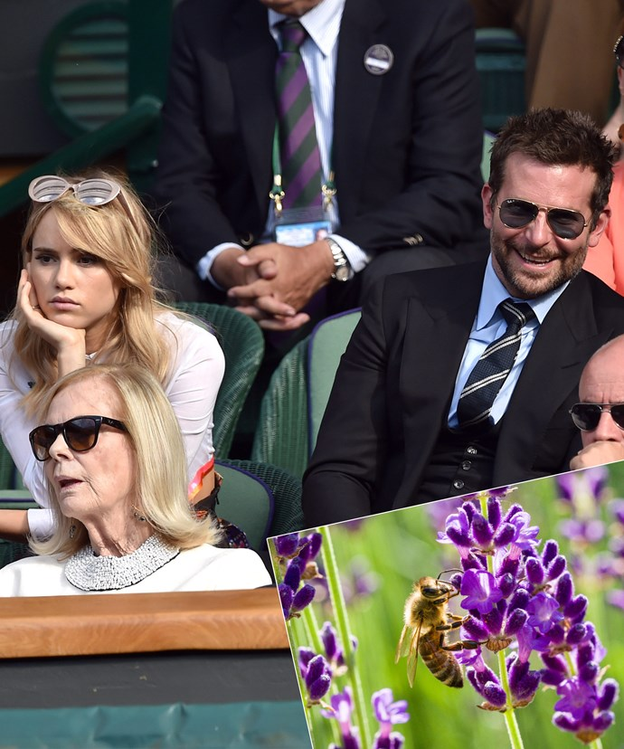Pollen seems to follow Mr Cooper around... The former couple attended a match back in 2014.