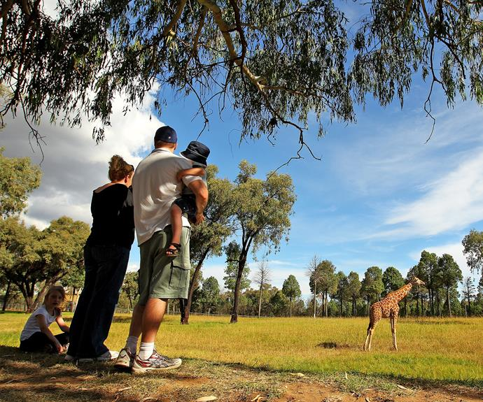 Your toddler will love a visit to the Western Plains Zoo.