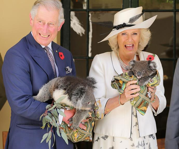 The Duchess of Cornwall isn't quite as at ease with Australia's cutest animal as her husband.
