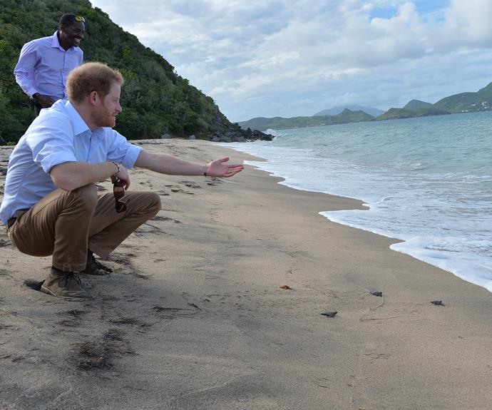 Prince Harry Arrives To Empty Crowd At St Kitts & Nevis