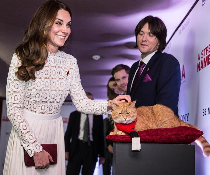 **It's always an honour:** From dignitaries... to cats! Catherine is always delighted to meet everyone including street cat and now film star, Bob.