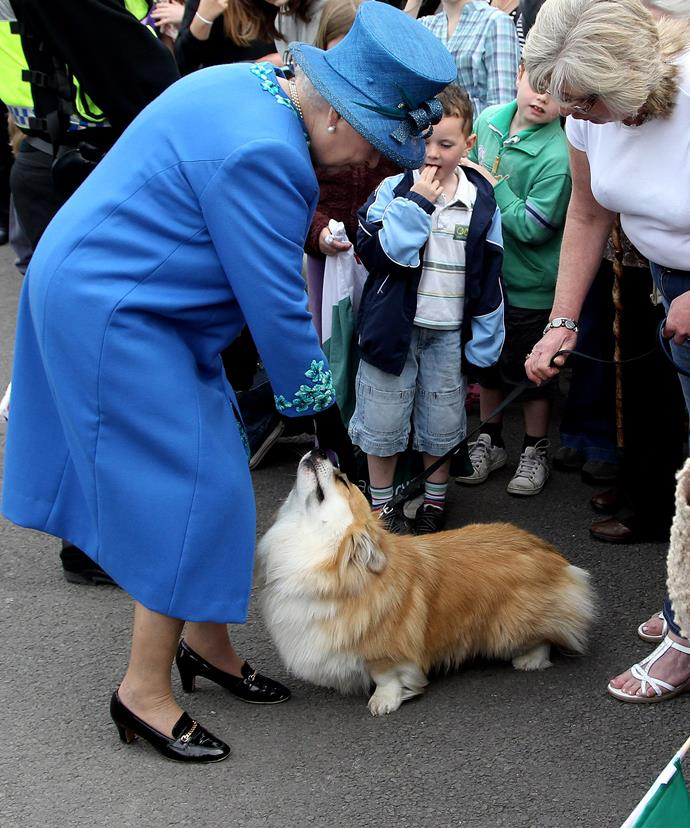 It was thought the Queen had 13 corgis at one time.