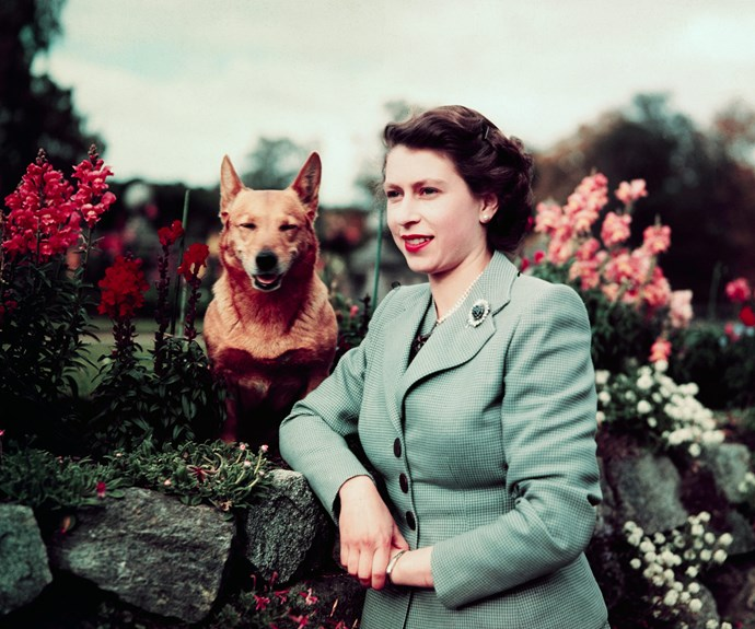 Her Majesty with her corgi, Susan.