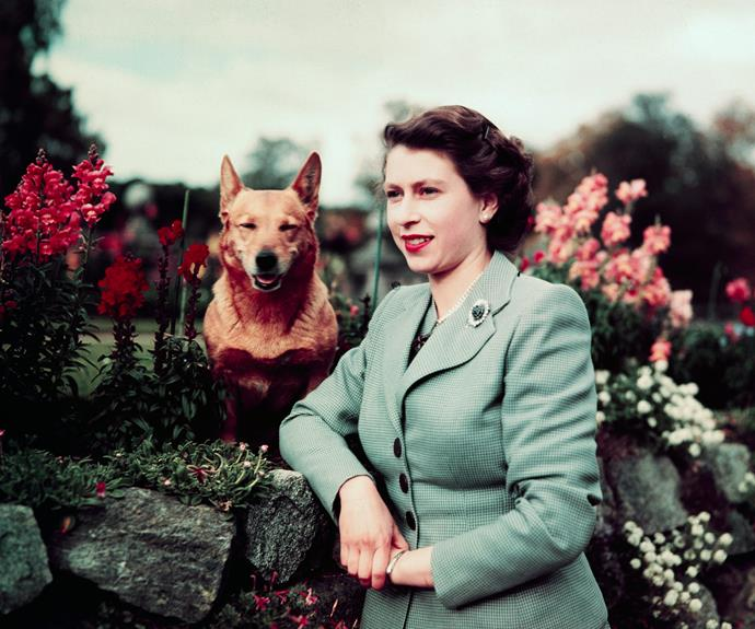 Her Majesty with her first corgi, Susan.